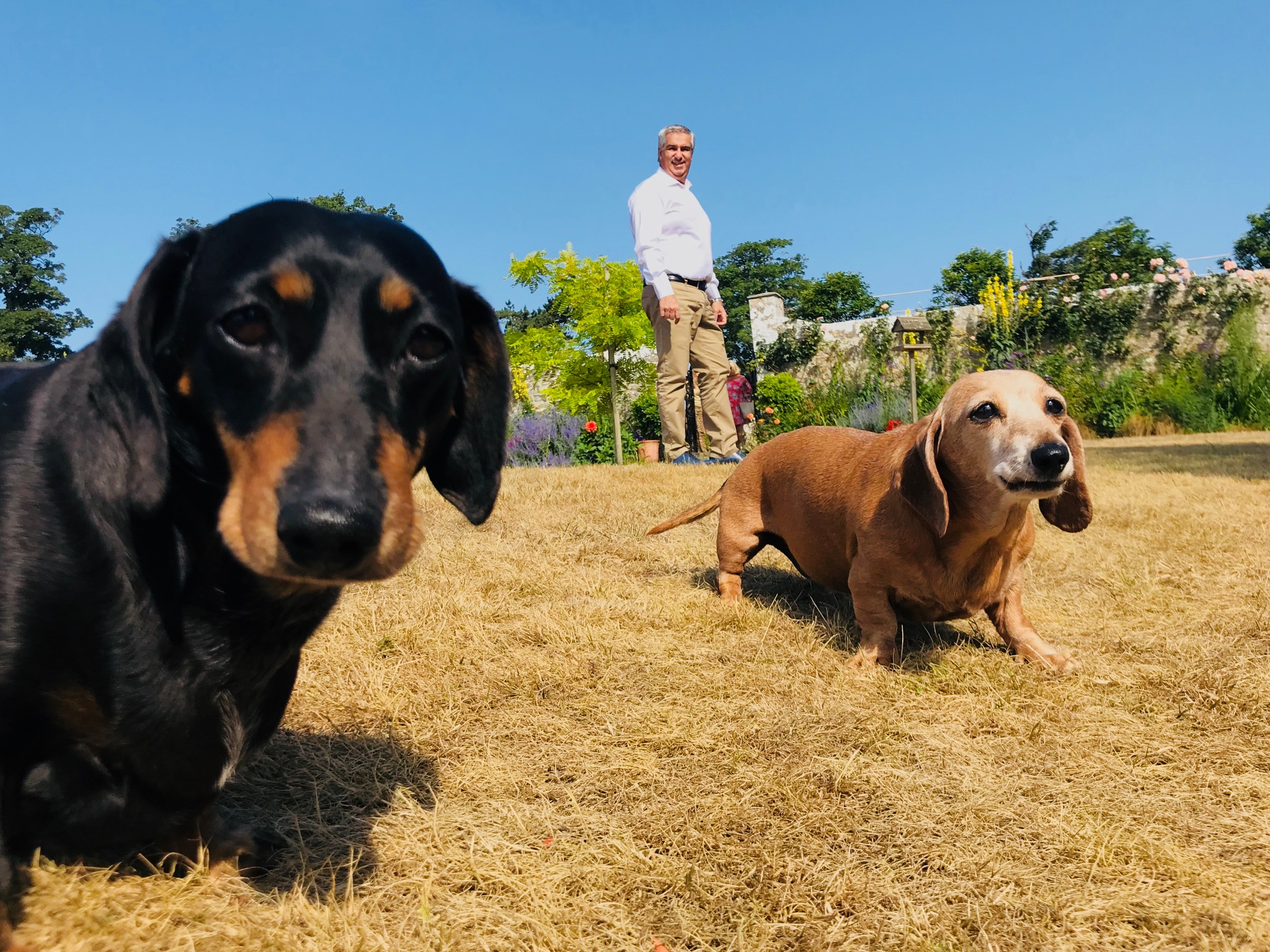 Gileston Manor's adorable 'house dogs' - Spiros Fine Dining & Events